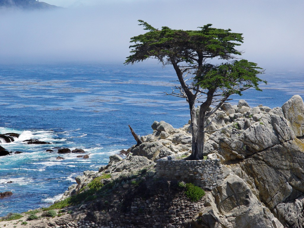 view on 17 mile drive